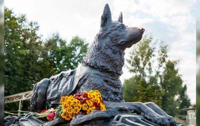 День фронтовой собаки отметили в Музее Победы